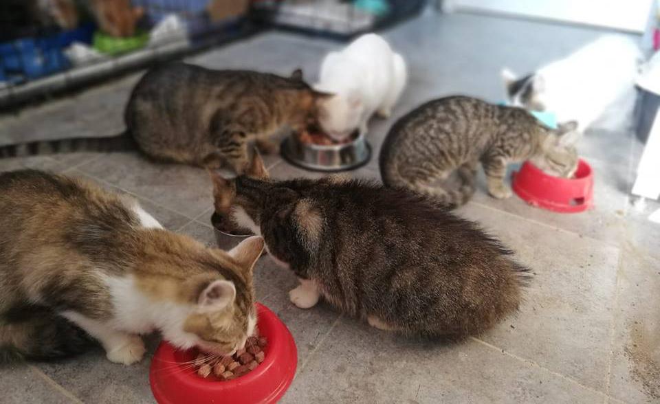 Zbiórka na śniadanie